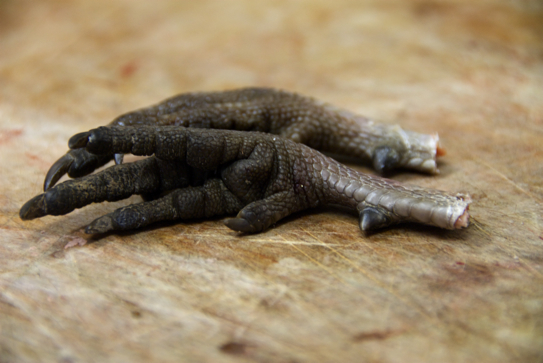 pheasant_claws_allens