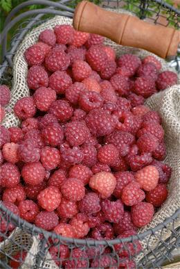 Raspberry_vinegar1