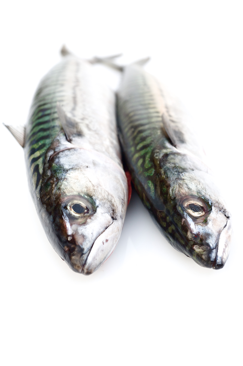 photo of mackerel